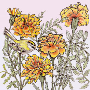 Fay's Studio Cards-Goldcrest