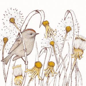 Fay's Studio Cards-Dandelions
