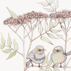 Fay's Studio Cards-Fledglings